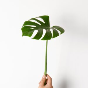 jabonera monstera